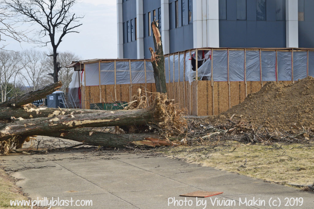 Martin Tower demolition, uprooted trees in the foreground with lobby in the background